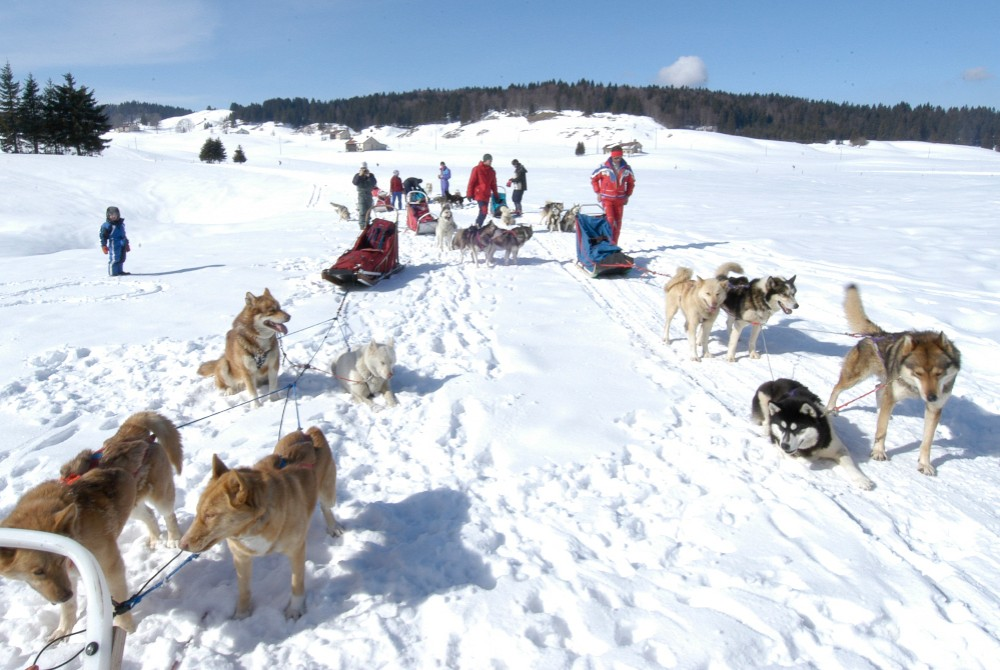 Cani-rando dans la neige : un moment magique dans cette colonie de vacances !